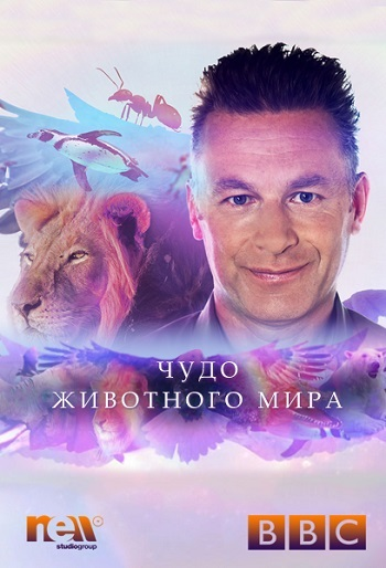 BBC. Чудо животного мира (HD-720 качество) все выпуски / Wonder of Animals (2014)